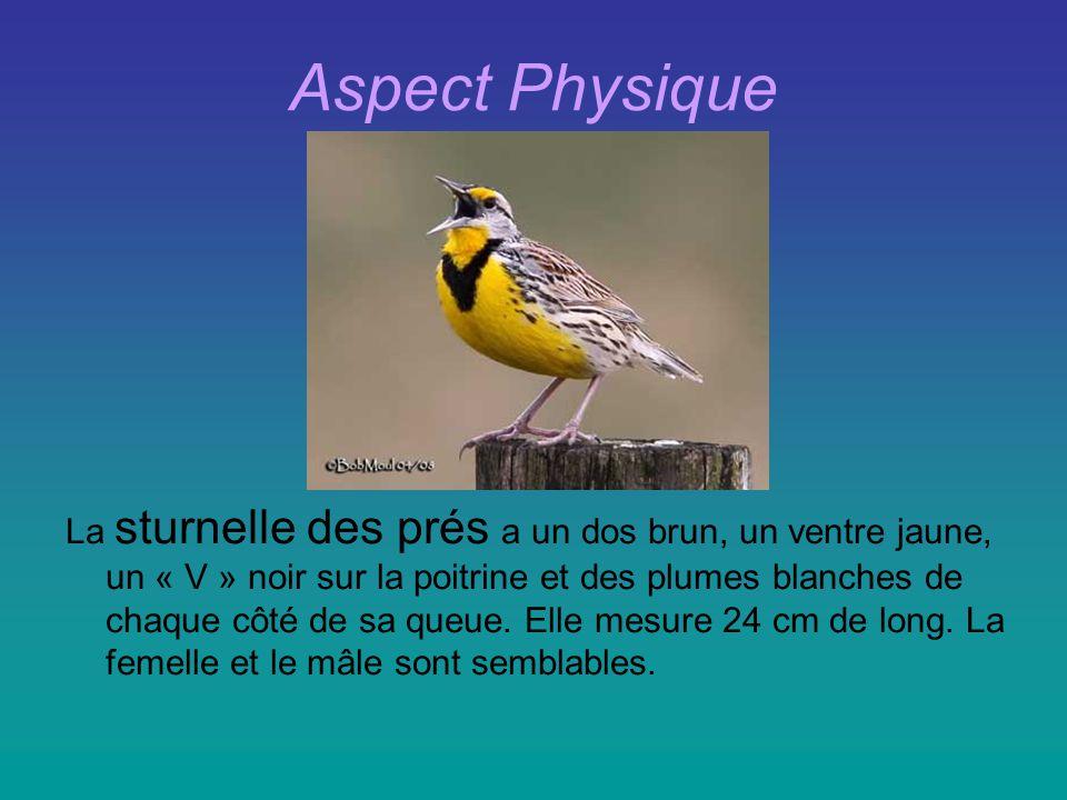 Aspect Physique La sturnelle des prés a un dos brun, un ventre jaune, un « V » noir sur la poitrine et des plumes blanches de chaque côté de sa queue.