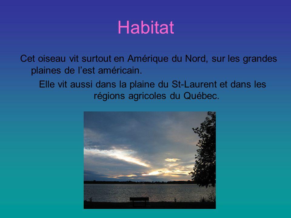 Habitat Cet oiseau vit surtout en Amérique du Nord, sur les grandes plaines de lest américain.