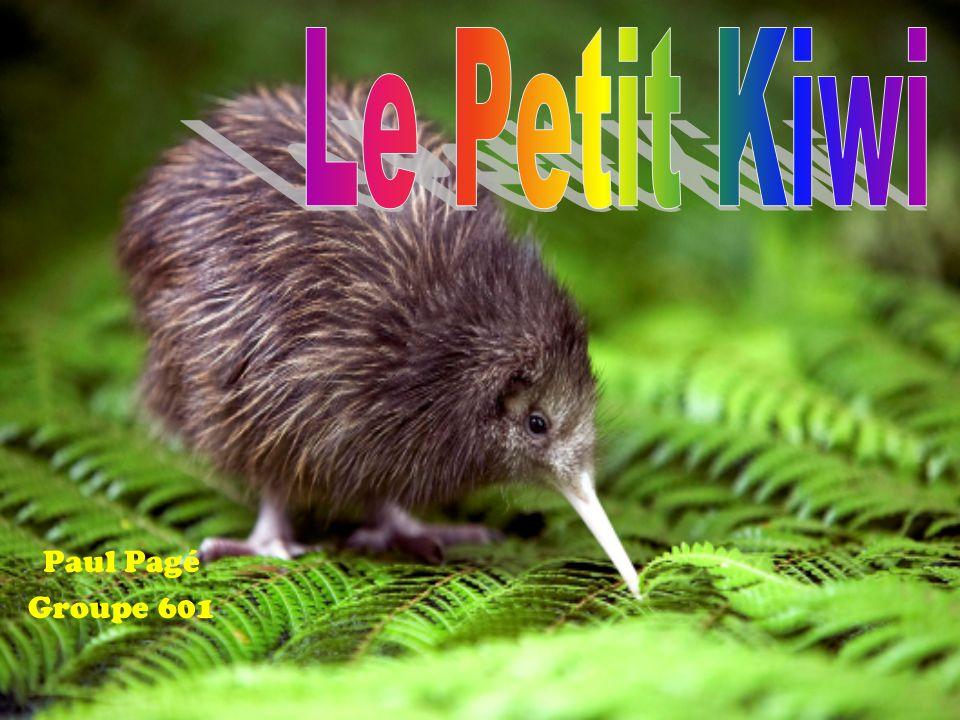 Kiwi austral https://fr.wikipedia.org/wiki/Kiwi_austral Kiwi austral http://www.oiseaux.net/oiseaux/kiwi.austral.html Le Kiwi http://educ.csmv.qc.ca/mgrparent/vieanimale/ois/Ki wi/Le%20Kiwi.html Le Kiwi http://www.bestioles.ca/oiseaux/kiwi.html