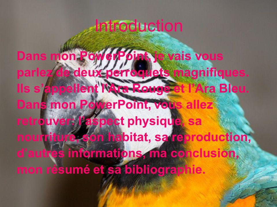Introduction Dans mon PowerPoint, je vais vous parlez de deux perroquets magnifiques. Ils sappellent lAra Rouge et lAra Bleu. Dans mon PowerPoint, vou