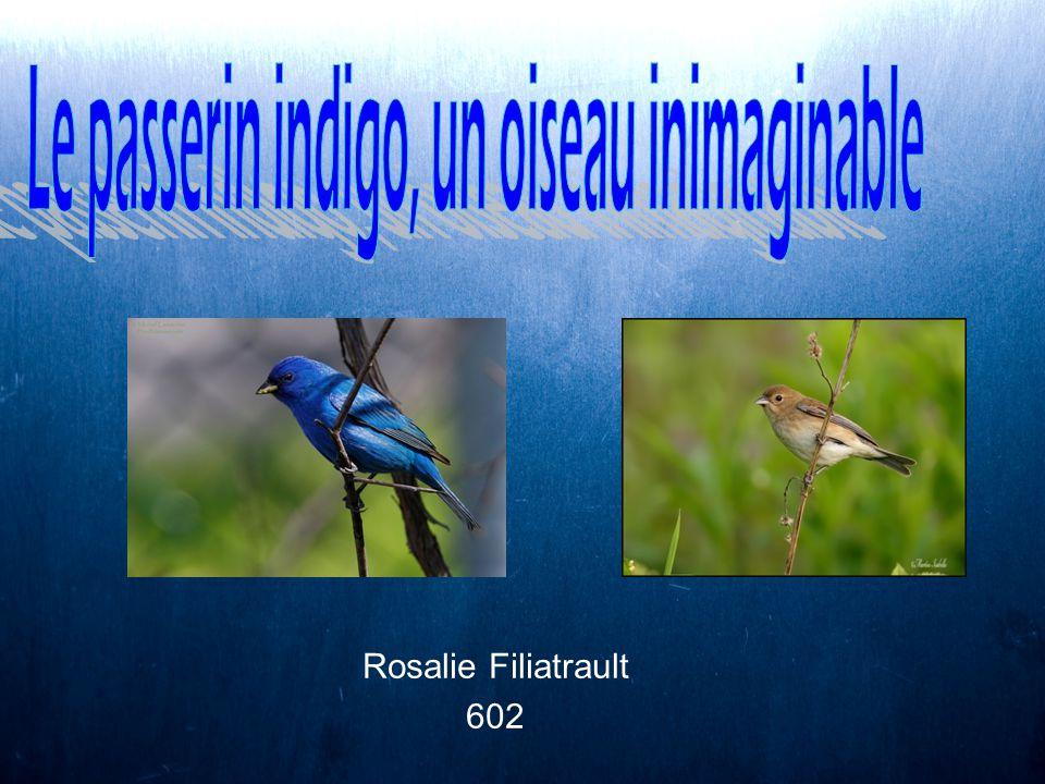 Rosalie Filiatrault 602