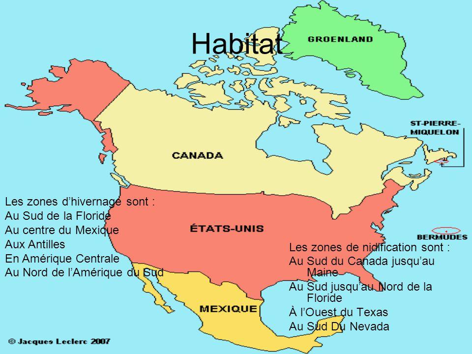 Habitat Les zones de nidification sont : Au Sud du Canada jusquau Maine Au Sud jusquau Nord de la Floride À lOuest du Texas Au Sud Du Nevada Les zones dhivernage sont : Au Sud de la Floride Au centre du Mexique Aux Antilles En Amérique Centrale Au Nord de lAmérique du Sud