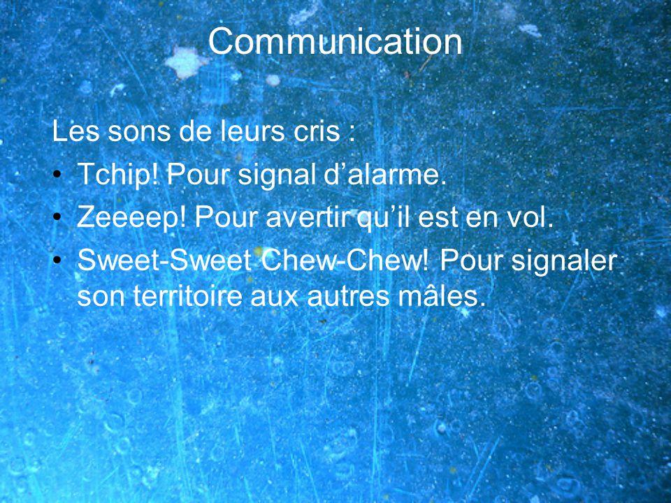 Communication Les sons de leurs cris : Tchip.Pour signal dalarme.