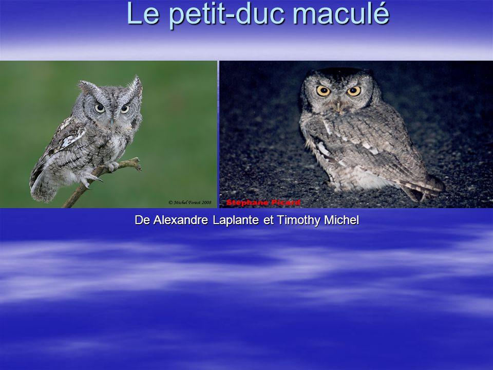 Le petit-duc maculé De Alexandre Laplante et Timothy Michel
