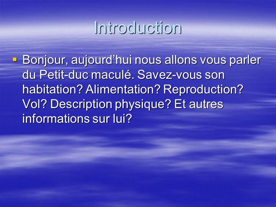 Introduction Bonjour, aujourdhui nous allons vous parler du Petit-duc maculé.