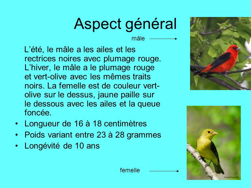 Aspect général Lété, le mâle a les ailes et les rectrices noires avec plumage rouge. Lhiver, le mâle a le plumage rouge et vert-olive avec les mêmes t