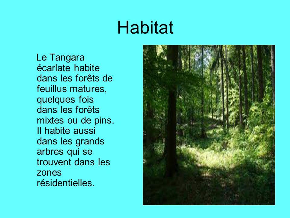 Habitat Le Tangara écarlate habite dans les forêts de feuillus matures, quelques fois dans les forêts mixtes ou de pins. Il habite aussi dans les gran