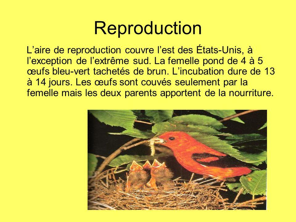 Reproduction Laire de reproduction couvre lest des États-Unis, à lexception de lextrême sud. La femelle pond de 4 à 5 œufs bleu-vert tachetés de brun.
