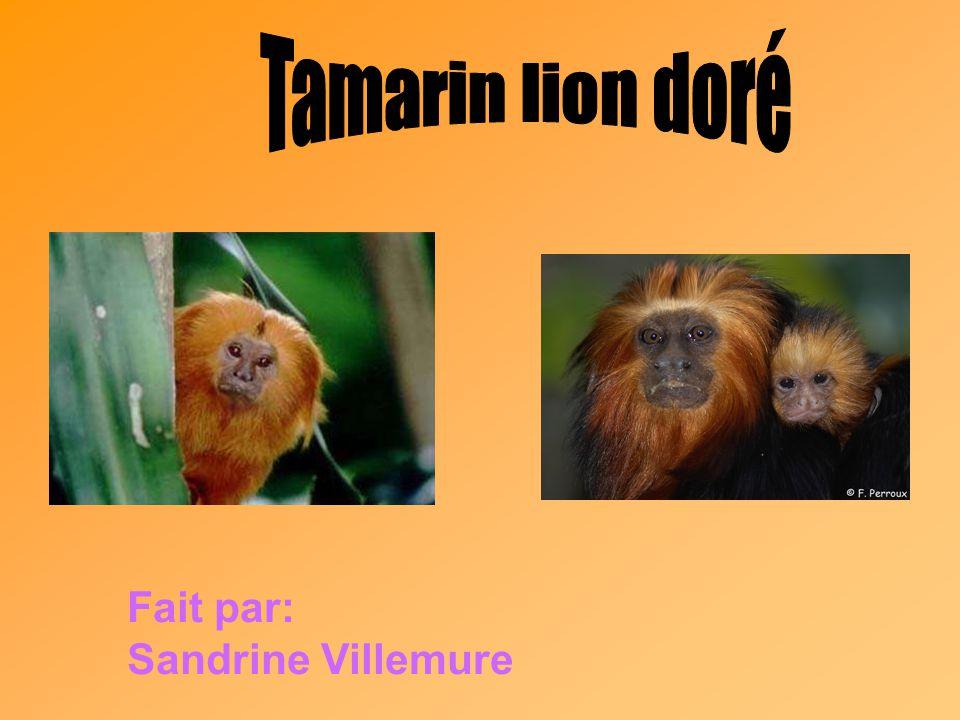 Fait par: Sandrine Villemure