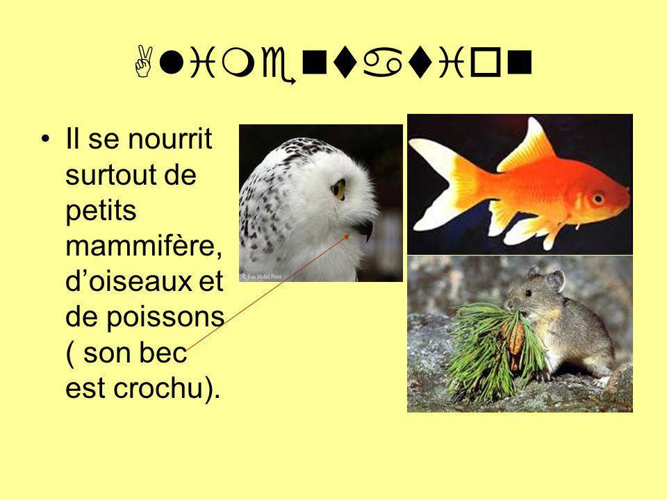 Habitat Cest un oiseau de la Toundra Arctique, des zones herbeuses et des champs.