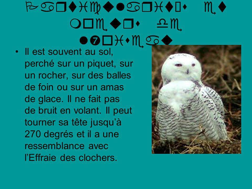 Webographie et Bibliographie http://www.oiseaux- bird.com/fiche-harfang- neiges.htmlhttp://www.oiseaux- bird.com/fiche-harfang- neiges.html Les oiseaux du Québec et de lest du Canada Fred J.