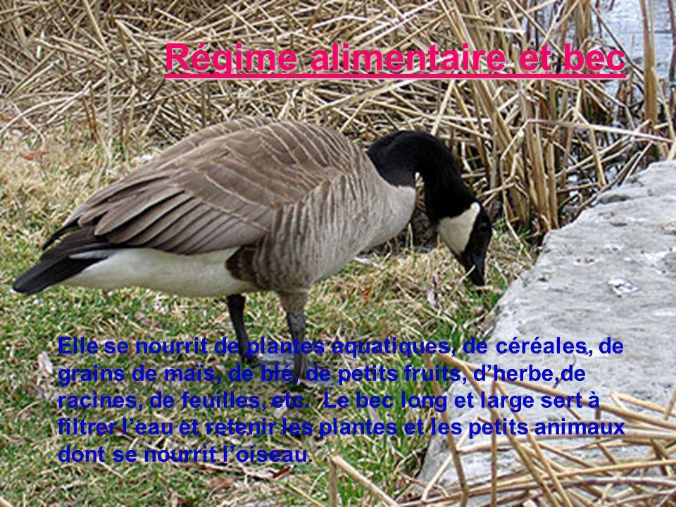 Habitat Elle habite tous les types de terres humides: les étangs, les rivières, les lacs et les champs.