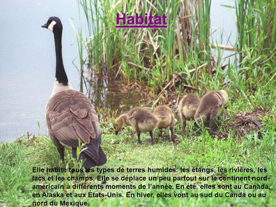 Habitat Elle habite tous les types de terres humides: les étangs, les rivières, les lacs et les champs. Elle se déplace un peu partout sur le continen