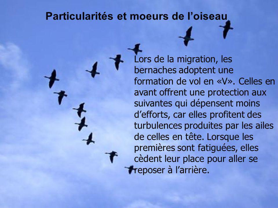 Bibliographie et Webographie Guide dobservation des oiseaux, Denis Faucher, 1994, Sélection du Readers Digest.