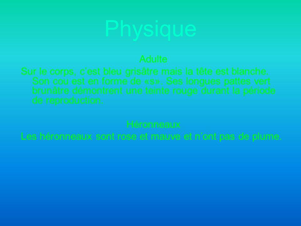 Physique Adulte Sur le corps, cest bleu grisâtre mais la tête est blanche.