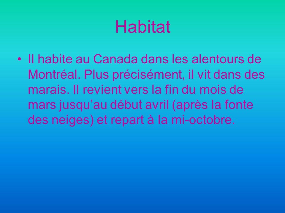 Habitat Il habite au Canada dans les alentours de Montréal.