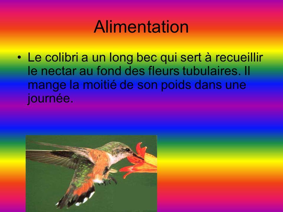 Alimentation Le colibri a un long bec qui sert à recueillir le nectar au fond des fleurs tubulaires.