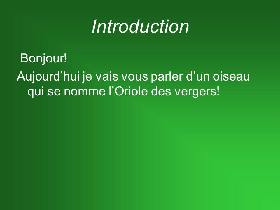 Introduction Bonjour! Aujourdhui je vais vous parler dun oiseau qui se nomme lOriole des vergers!
