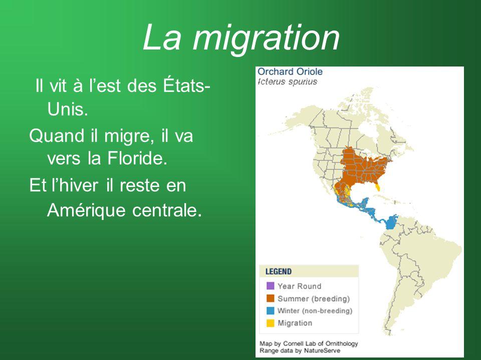 La migration Il vit à lest des États- Unis. Quand il migre, il va vers la Floride. Et lhiver il reste en Amérique centrale.