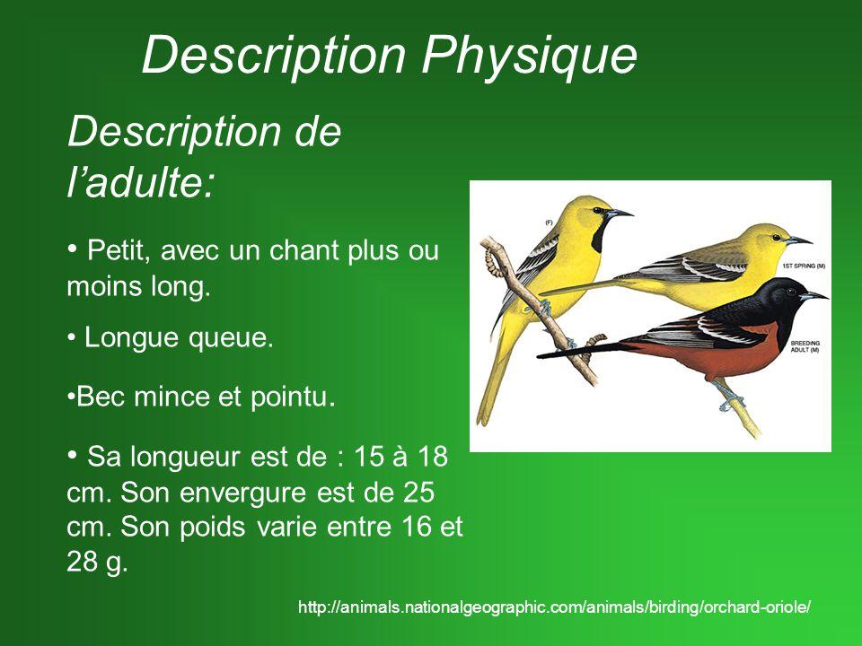 Description Physique Description de ladulte: Petit, avec un chant plus ou moins long. Longue queue. Bec mince et pointu. Sa longueur est de : 15 à 18