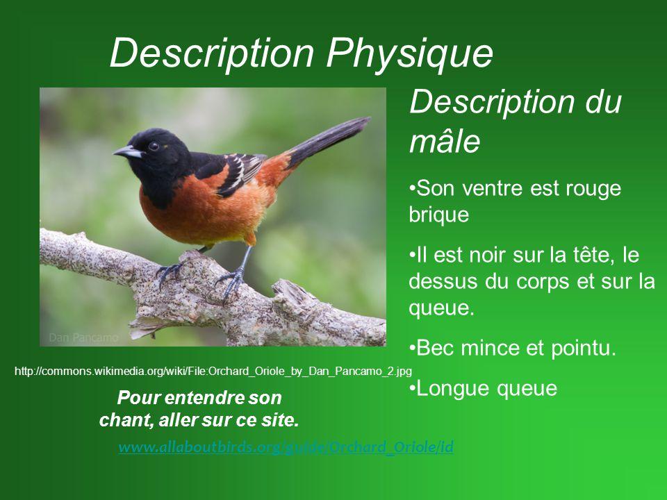 Description Physique (suite) Description de la femelle.