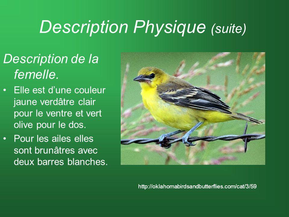 Description Physique (suite) Description de la femelle. Elle est dune couleur jaune verdâtre clair pour le ventre et vert olive pour le dos. Pour les