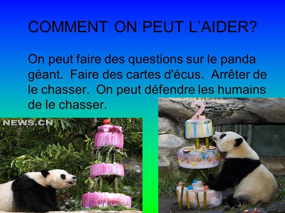 COMMENT ON PEUT LAIDER.On peut faire des questions sur le panda géant.