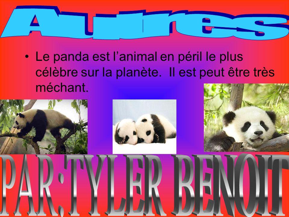 Le panda est lanimal en péril le plus célèbre sur la planète. Il est peut être très méchant.