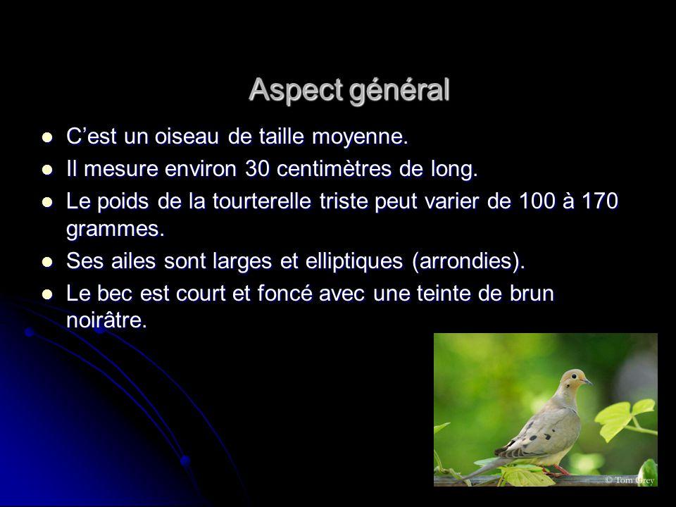 Aspect général Cest un oiseau de taille moyenne. Il mesure environ 30 centimètres de long. Le poids de la tourterelle triste peut varier de 100 à 170