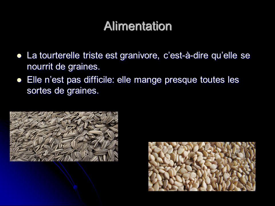 Alimentation La tourterelle triste est granivore, cest-à-dire quelle se nourrit de graines. La tourterelle triste est granivore, cest-à-dire quelle se