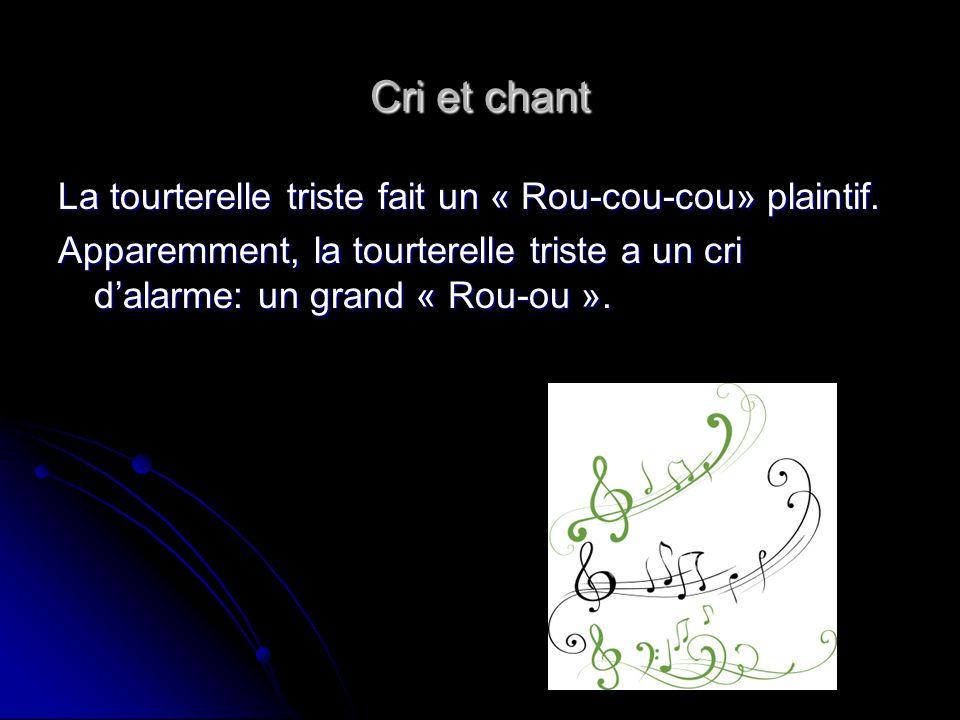 Cri et chant La tourterelle triste fait un « Rou-cou-cou» plaintif. Apparemment, la tourterelle triste a un cri dalarme: un grand « Rou-ou ».