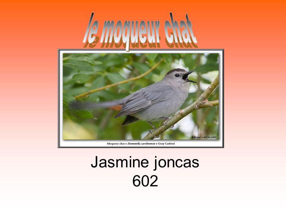 Jasmine joncas 602