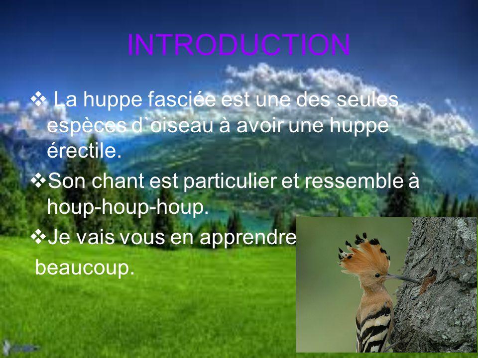 TABLE DES MATIÈRE Introduction Habitat Nourriture Aspect physique Reproduction Divers Conclusion Résumé Bibliographie