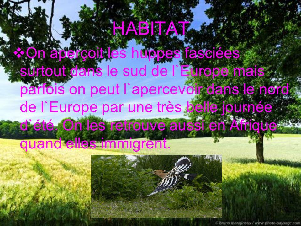 INTRODUCTION La huppe fasciée est une des seules espèces d`oiseau à avoir une huppe érectile. Son chant est particulier et ressemble à houp-houp-houp.