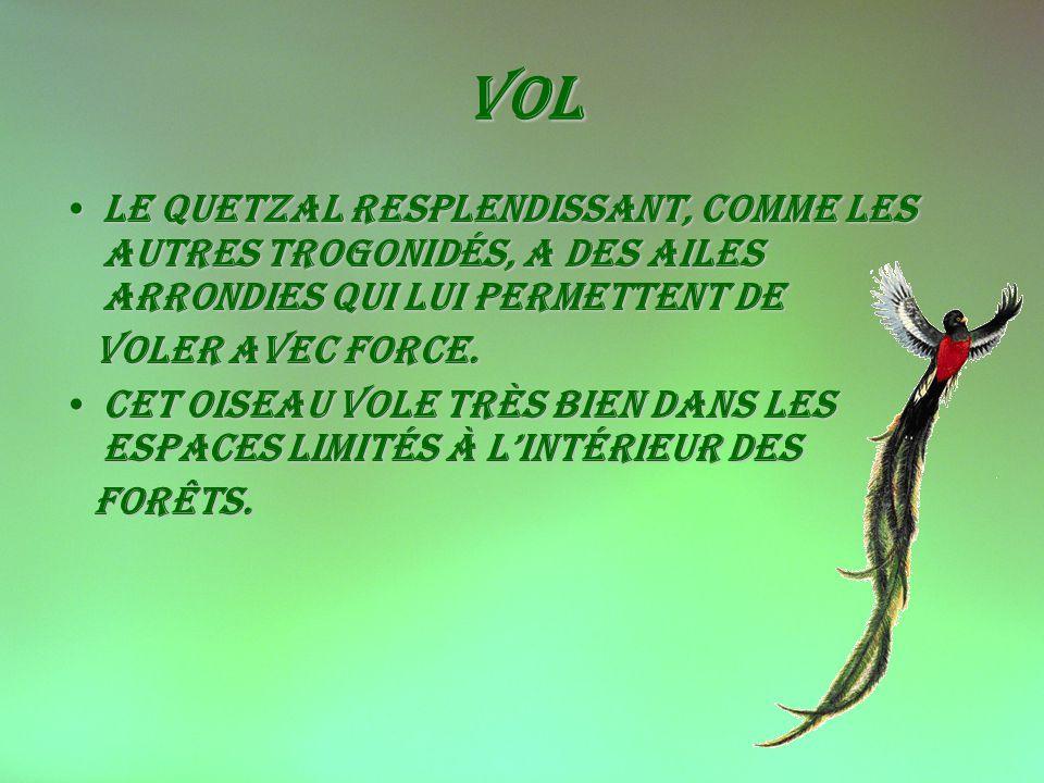Vol Le Quetzal resplendissant, comme les autres Trogonidés, a des ailes arrondies qui lui permettent deLe Quetzal resplendissant, comme les autres Trogonidés, a des ailes arrondies qui lui permettent de Voler avec force.