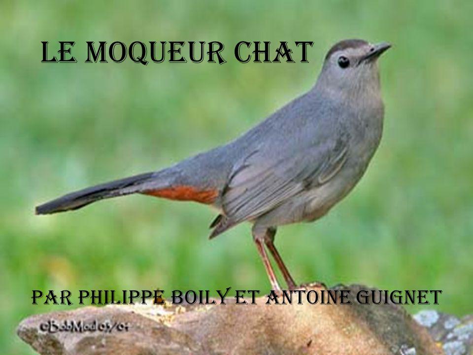 Le moqueur chat Par Philippe Boily et Antoine Guignet