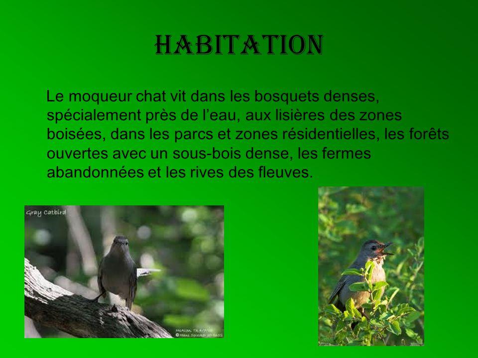 habitation Le moqueur chat vit dans les bosquets denses, spécialement près de leau, aux lisières des zones boisées, dans les parcs et zones résidentie