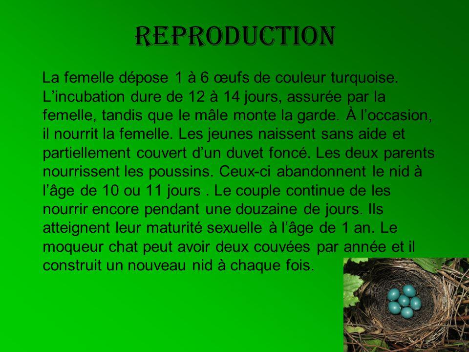 Reproduction La femelle dépose 1 à 6 œufs de couleur turquoise. Lincubation dure de 12 à 14 jours, assurée par la femelle, tandis que le mâle monte la