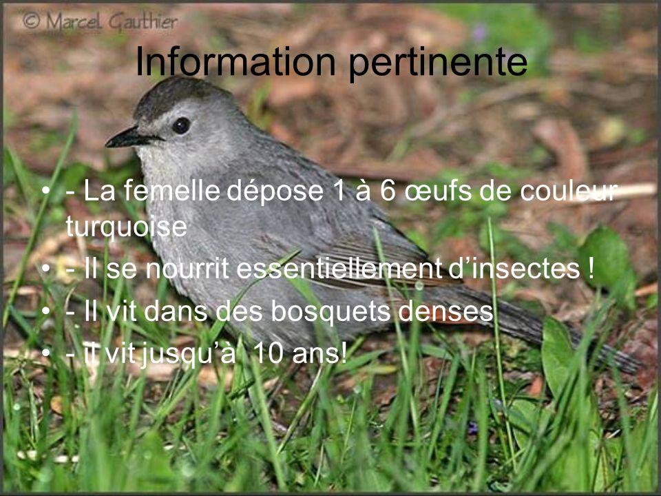 Information pertinente - La femelle dépose 1 à 6 œufs de couleur turquoise - Il se nourrit essentiellement dinsectes ! - Il vit dans des bosquets dens