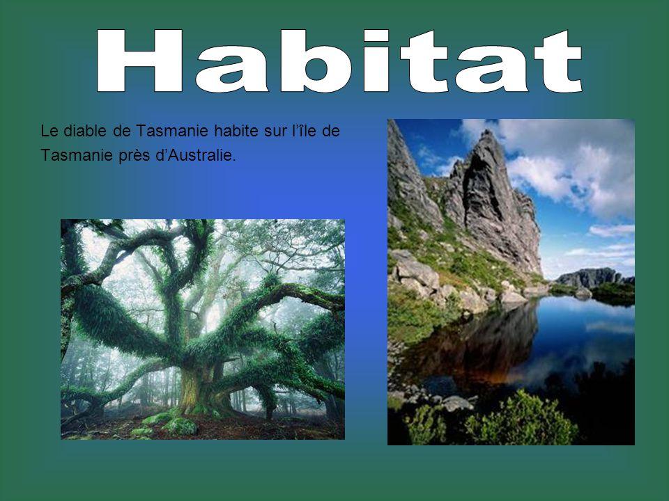 Le diable de Tasmanie habite sur lîle de Tasmanie près dAustralie.