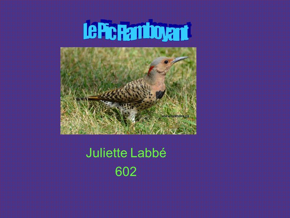 Image http://www.google.cahttp://www.google.ca Informations http://www.bestioles.ca/oiseaux/Pic Flambloyant.htlm http://www.bestioles.ca/oiseaux/Pic Flambloyant.htlm