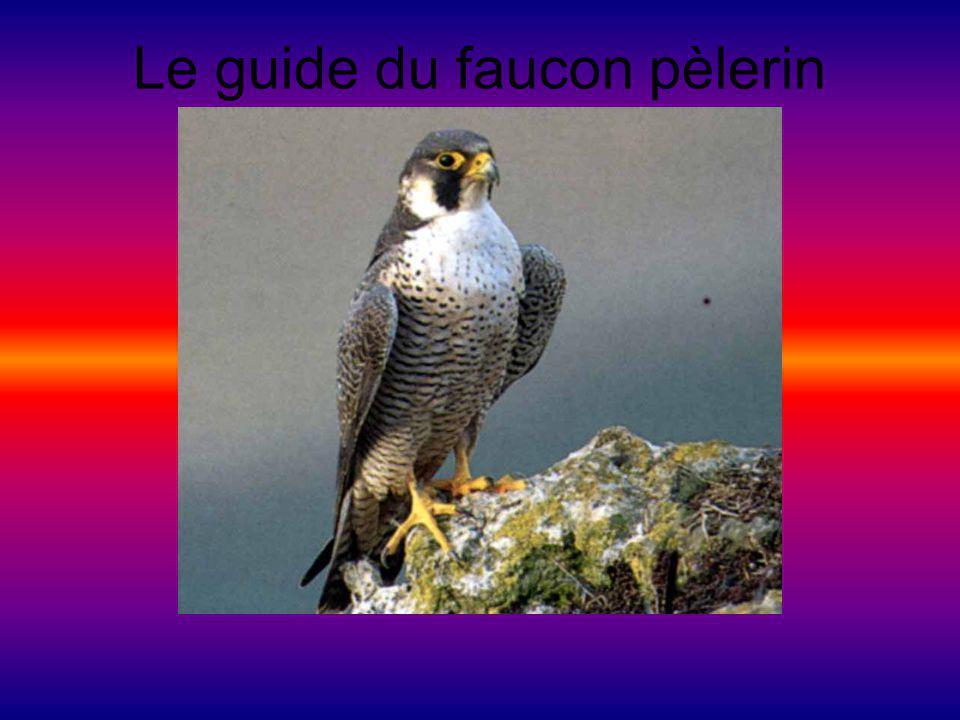 Aspect général Il mesure 38 cm à 50 cm.Il a des ailes pointues et il a une queue étroite.