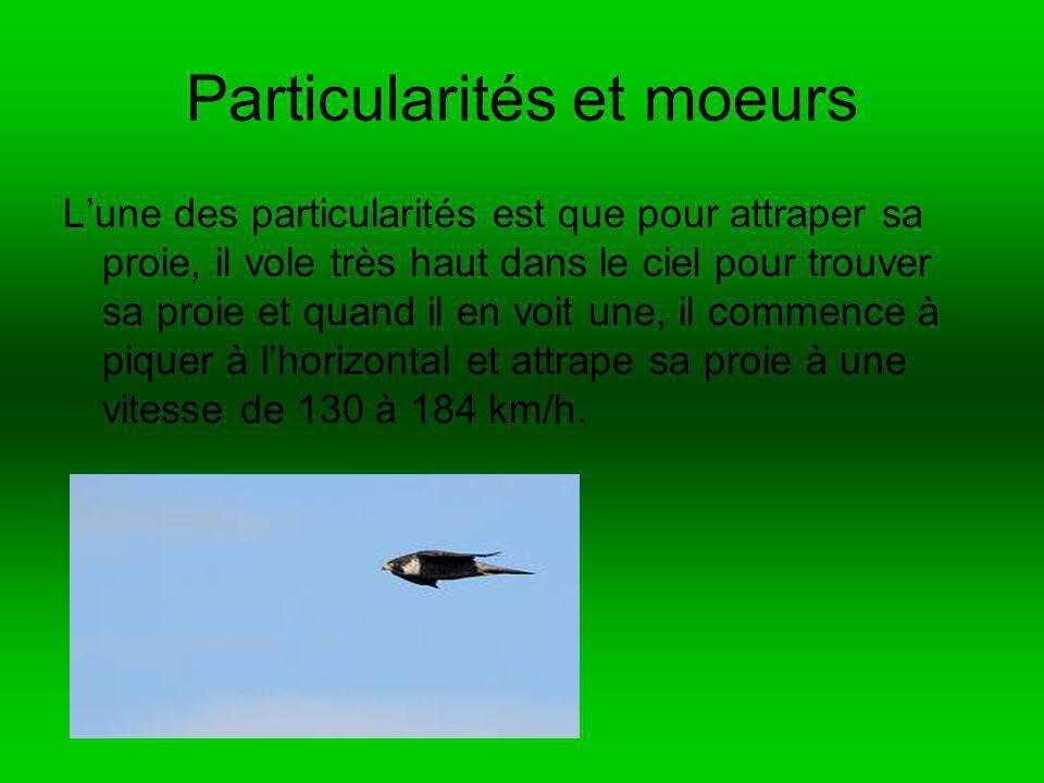 Webographie et bibliographie Www.http://fr.wikipedia.org/wiki/faucon_p%c 3%a8lerin livre: les oiseaux du Québec guide dinitiation auteur Suzanne Brûlotte éditeur Antoine Broquet édition broquet