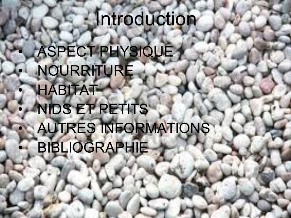 Introduction ASPECT PHYSIQUE NOURRITURE HABITAT NIDS ET PETITS AUTRES INFORMATIONS BIBLIOGRAPHIE