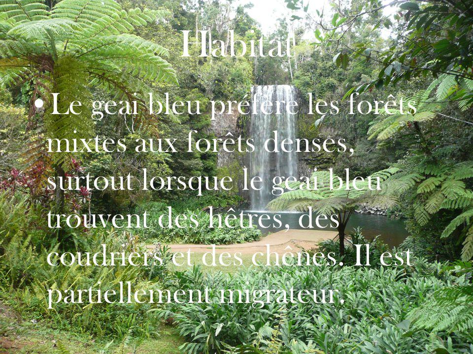 Habitat Le geai bleu préfère les forêts mixtes aux forêts denses, surtout lorsque le geai bleu trouvent des hêtres, des coudriers et des chênes.
