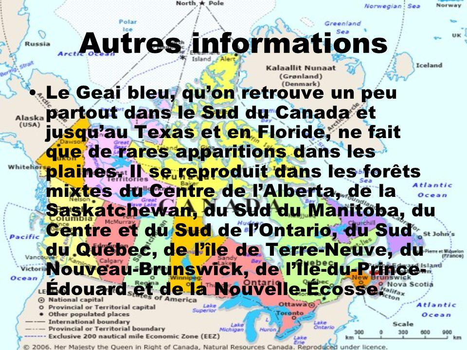 Autres informations Le Geai bleu, quon retrouve un peu partout dans le Sud du Canada et jusquau Texas et en Floride, ne fait que de rares apparitions
