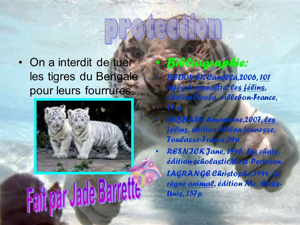 On a interdit de tuer les tigres du Bengale pour leurs fourrures. Bibliographie: BEDOYER Camilla,2006, 101 infos à connaître: les félins, édition Pico