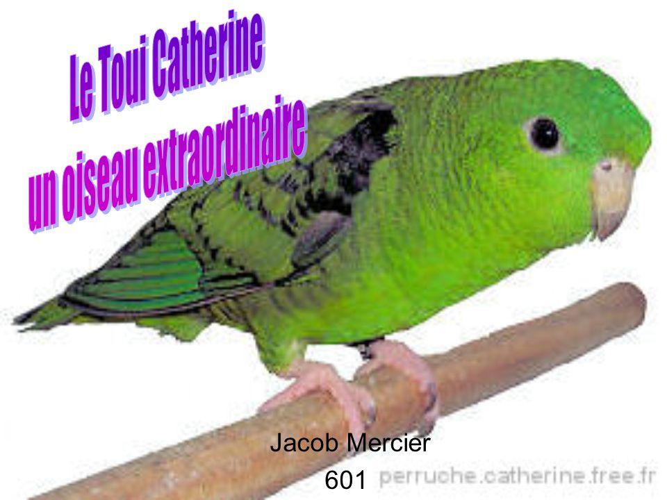 Jacob Mercier 601