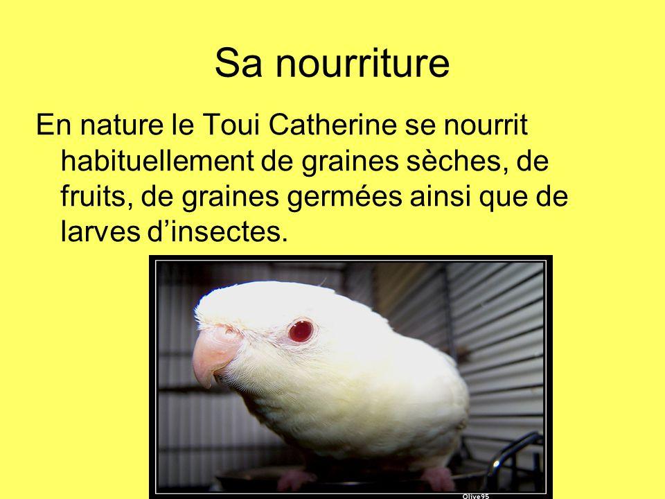 Sa nourriture En nature le Toui Catherine se nourrit habituellement de graines sèches, de fruits, de graines germées ainsi que de larves dinsectes.