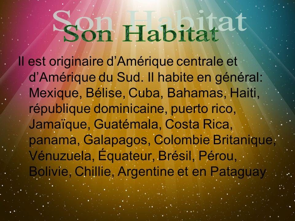 Il est originaire dAmérique centrale et dAmérique du Sud. Il habite en général: Mexique, Bélise, Cuba, Bahamas, Haiti, république dominicaine, puerto